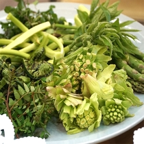 【山菜プラン】豪雪地域・津南で採れる山菜は灰汁が少なく、柔らかくてとっても美味しいんです♪