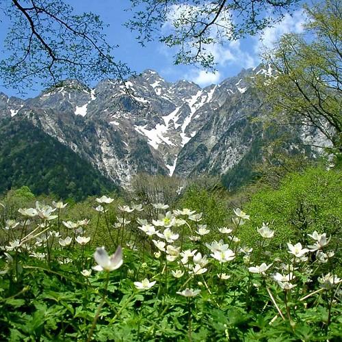 ■【春の上高地】花々と景色を楽しみながら