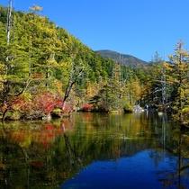 ■【秋の上高地】緑と黄色のコントラスト