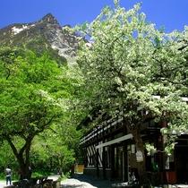■【春の上高地】花を見ながらゆっくり一休み