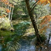 ■【秋の上高地】紅葉の間を流れる川