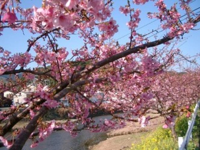 一足早い春の訪れ『河津桜』