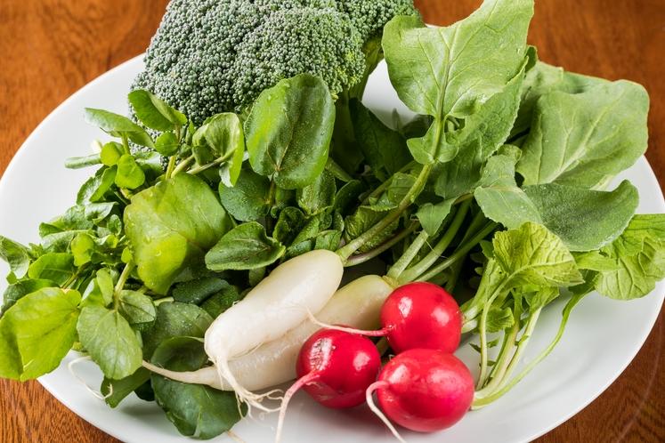 旬の季節の野菜たち