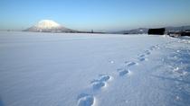 【周辺風景】雪景色