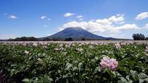 【周辺風景】春の羊蹄山