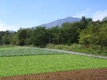 浅間山と野菜畑