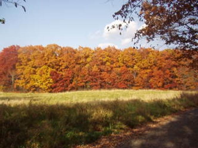 散歩コースの紅葉