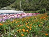 大瀬 花狩り園