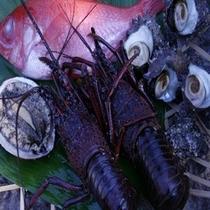 南伊豆産 海の食材
