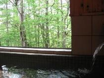 温泉から新緑