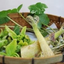 山のめぐみ山菜