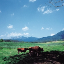 園地でジャージー牛の放牧に出会うことも!