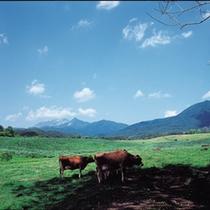 蒜山での高原