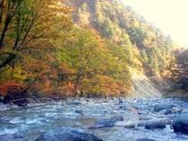 白馬岳に向かう道(秋)