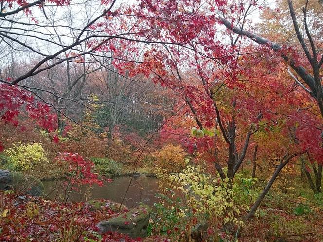 ペンションの周辺の紅葉