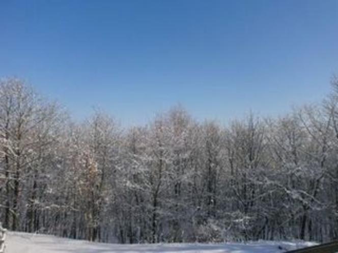 釧路湿原 冬の樹氷