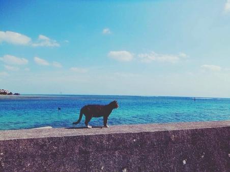 リーズナブルコバルトブルーの海に逢いたい現金決済特典素泊まり