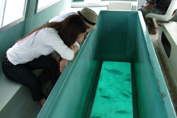 島内 グラスボートで熱帯魚と珊瑚を