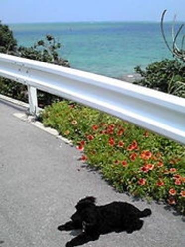 島の東側(階段を下りると小さな砂浜が・・・。)
