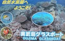 熱帯魚はここ島内奥武島海底遊覧船グラスボート