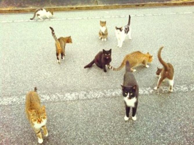 観光客の持つ天ぷらをおねだりする為むらがる島の猫たち