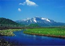 尾瀬ヶ原 春