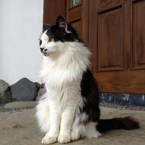 猫スタッフの中で1番接客上手 コルテス
