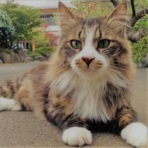 【猫スタッフ】Instagram #今日のダヤンさま