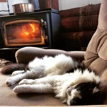 寒い日にリビングの薪ストーブ前で寛ぐ猫スタッフ(コルテス)