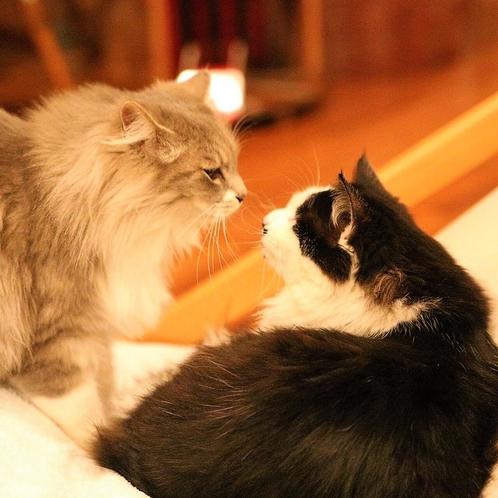 【無料オプション・猫のおもてなし】希望の方は備考欄でお知らせください♪