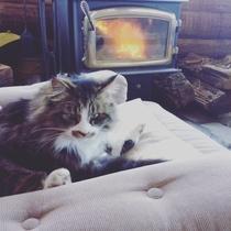 暖かな薪ストーブ前は猫スタッフにも人気の場所