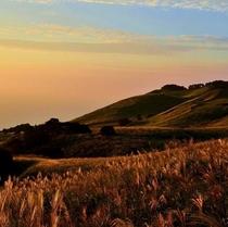 【秋のおすすめ】東伊豆町稲取 細野高原 すすき狩り(夏も絶景)金色の野に降り立ってナウシカごっこなど