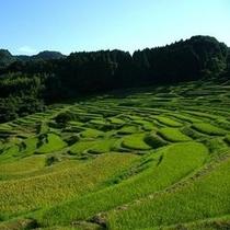 ◆大山千枚田 (車で約40分)