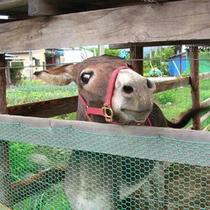 【動物ふれあい体験・ろば】動物と触れ合ってみて下さい。