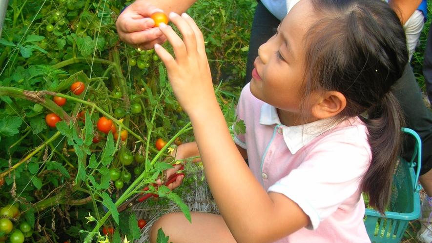 *【秩父ふるさと村】農業体験として収穫した野菜をお土産にお持ち帰りいただけます(別途料金)