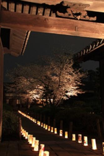 【観光】本妙寺桜灯籠