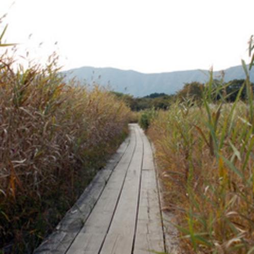 周辺観光 -箱根湿生花園-