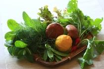 自家菜園の手作り有機野菜