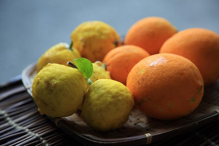 自家菜園 檸檬&柚子