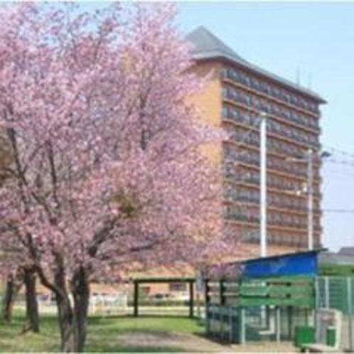 ★ホテル周辺・桜咲く