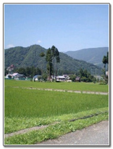 田んぼ風景2
