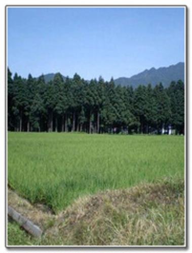 田んぼ風景1