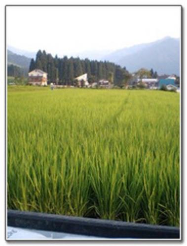 田んぼ風景5