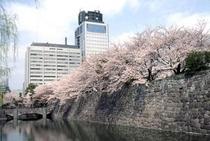 駿府公園 お花見