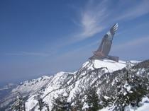 かぐら山頂での凧揚げ画像です。本物の鳥みたいですね!