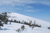 かぐらゲレンデ 4月の第5ロマンスリフトから、コース外の足跡斜面