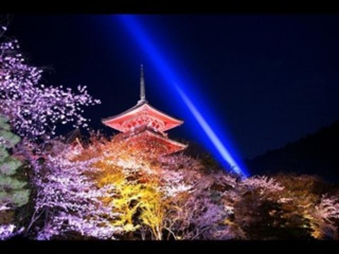 清水寺 夜桜