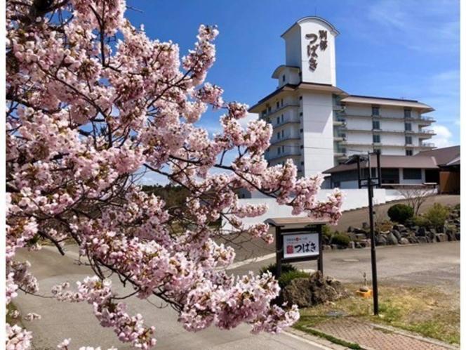男鹿半島の桜は4月中旬頃から!