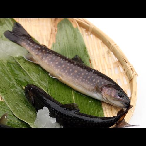 活岩魚、まだ生きています