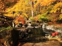 【紅葉シーズン岩露天】大自然に囲まれた露天風呂。この時期にしか楽しめない景色をお楽しみ下さい